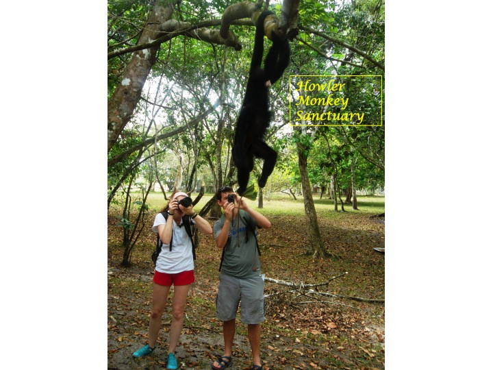 Photo of students taking pictures of monkeys at Howler Monkey Sanctuary in Belize